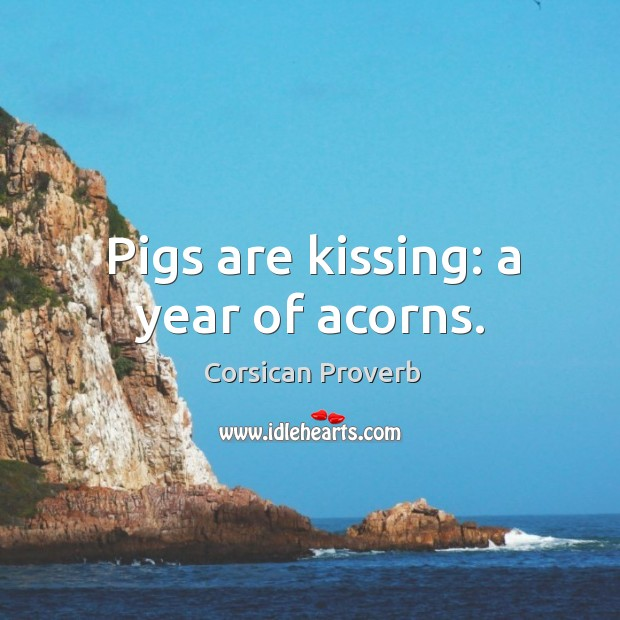 Pigs are kissing: a year of acorns. Image