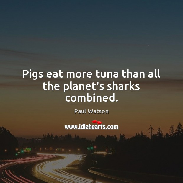 Pigs eat more tuna than all the planet's sharks combined. Paul Watson Picture Quote