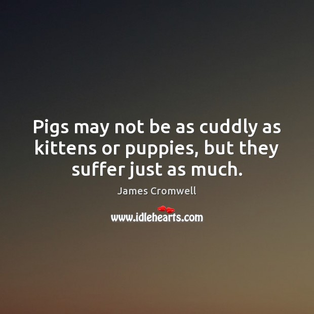 Pigs may not be as cuddly as kittens or puppies, but they suffer just as much. Image