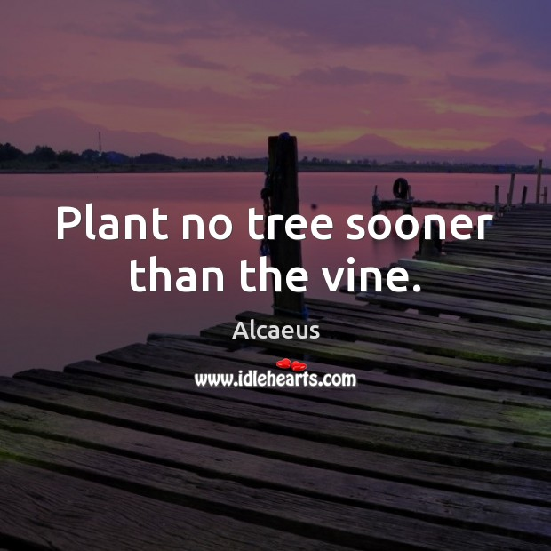 Image, Plant no tree sooner than the vine.