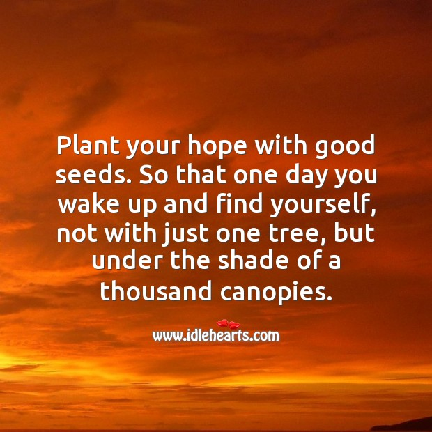 Plant your hope with good seeds. Motivational Quotes Image