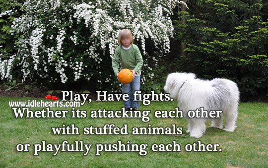 Play, Have fights With Each Other.