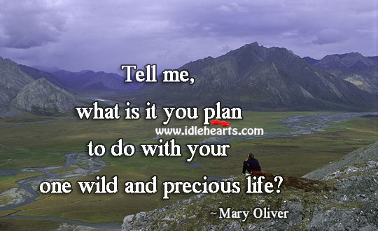 What is your plan with your wild and precious life Mary Oliver Picture Quote