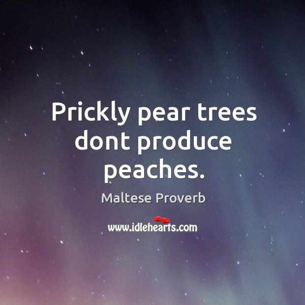 Prickly pear trees dont produce peaches. Maltese Proverbs Image