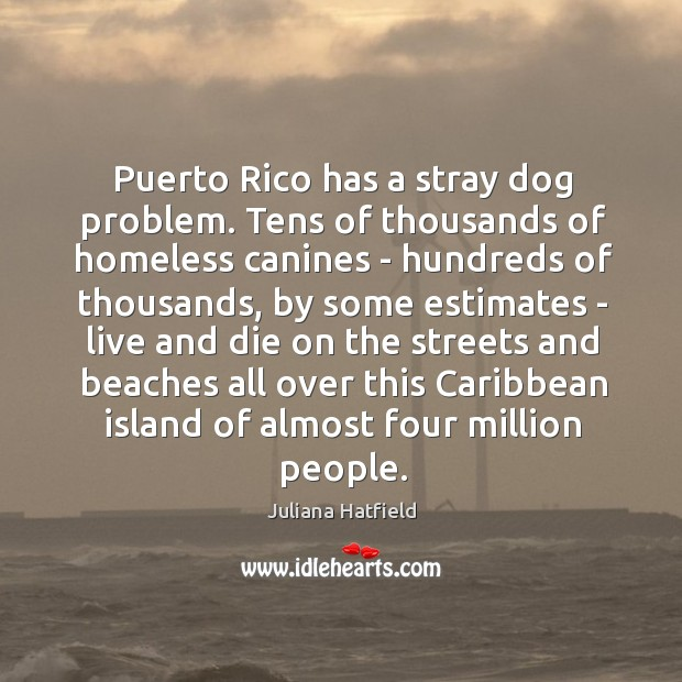 essay on problem of stray dogs Chaotic urban arrangement and overpopulation of the humans have already led to equally enormous population of stray dogs in majority of places in the world there are numerous common problems that can be caused by stray dogs, and here are the top ten 1 - a dog that is out on its own can cause a collision when it.