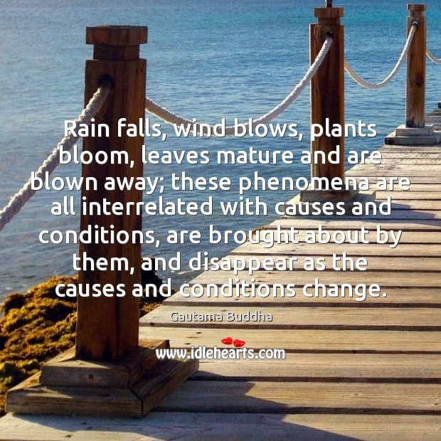 Rain falls, wind blows, plants bloom, leaves mature and are blown away; Image