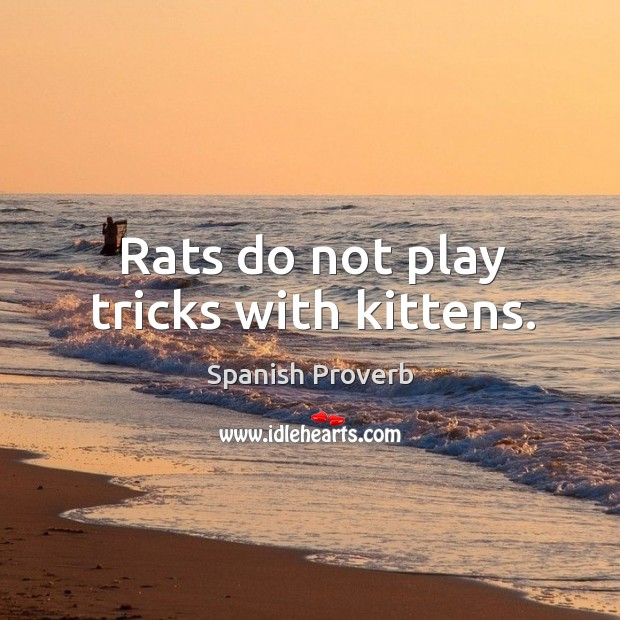 Image, Rats do not play tricks with kittens.