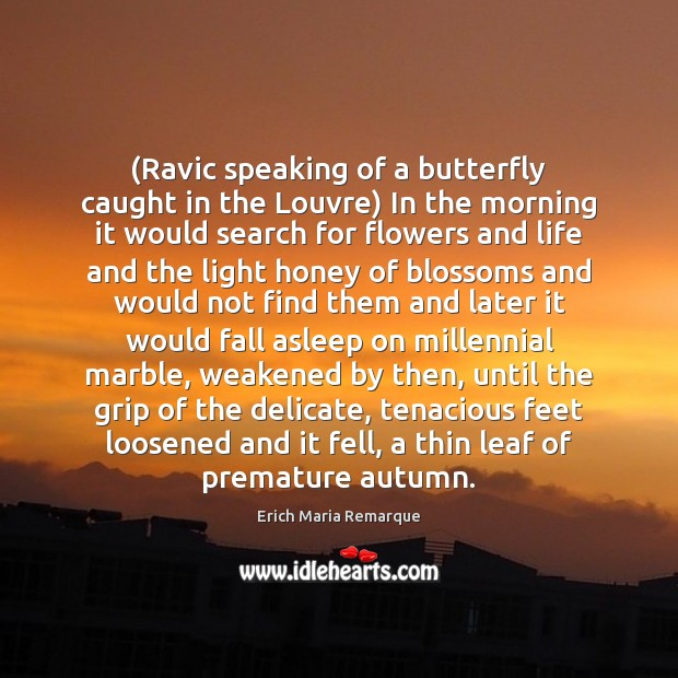 (Ravic speaking of a butterfly caught in the Louvre) In the morning Erich Maria Remarque Picture Quote