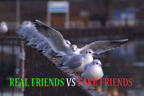 Real Friends vs Fake Friends
