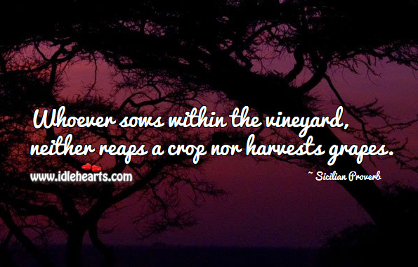 Whoever sows within the vineyard, neither reaps a crop nor harvests grapes. Sicilian Proverbs Image