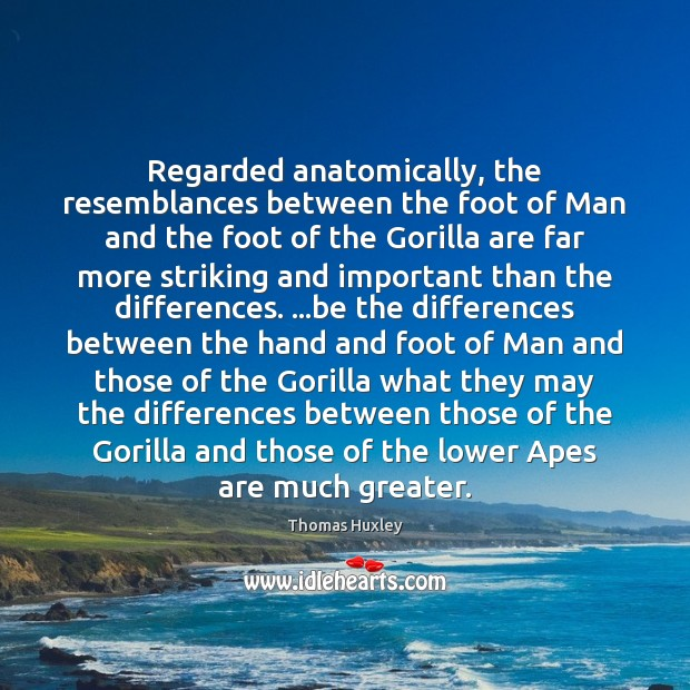 Regarded anatomically, the resemblances between the foot of Man and the foot Image
