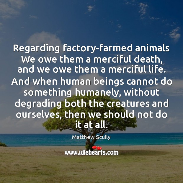 Regarding factory-farmed animals We owe them a merciful death, and we owe Matthew Scully Picture Quote
