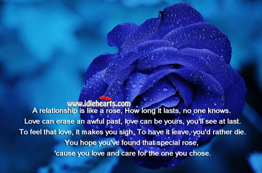 A Relationship is Like a Rose.