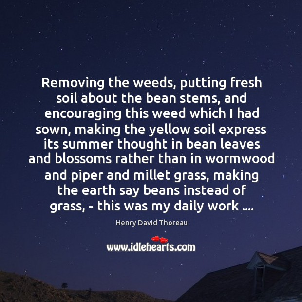 Removing the weeds, putting fresh soil about the bean stems, and encouraging Image