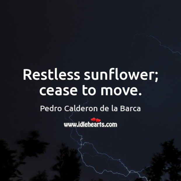 Restless sunflower; cease to move. Image