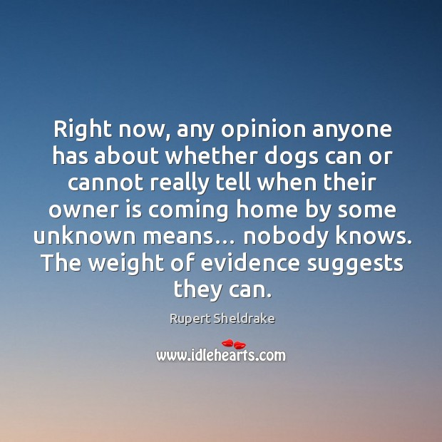 Right now, any opinion anyone has about whether dogs can or cannot really tell when Rupert Sheldrake Picture Quote