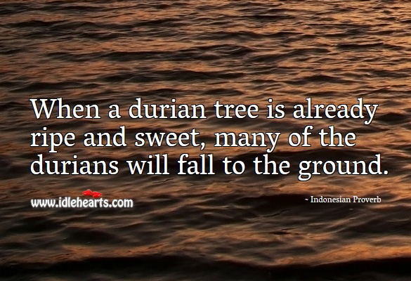 When a durian tree is already ripe and sweet, many of the durians will fall to the ground. Indonesian Proverbs Image