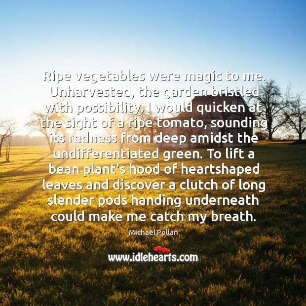 Ripe vegetables were magic to me. Unharvested, the garden bristled with possibility. Image