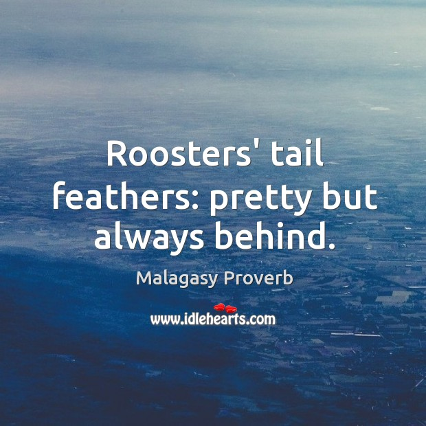 Roosters' tail feathers: pretty but always behind. Malagasy Proverbs Image