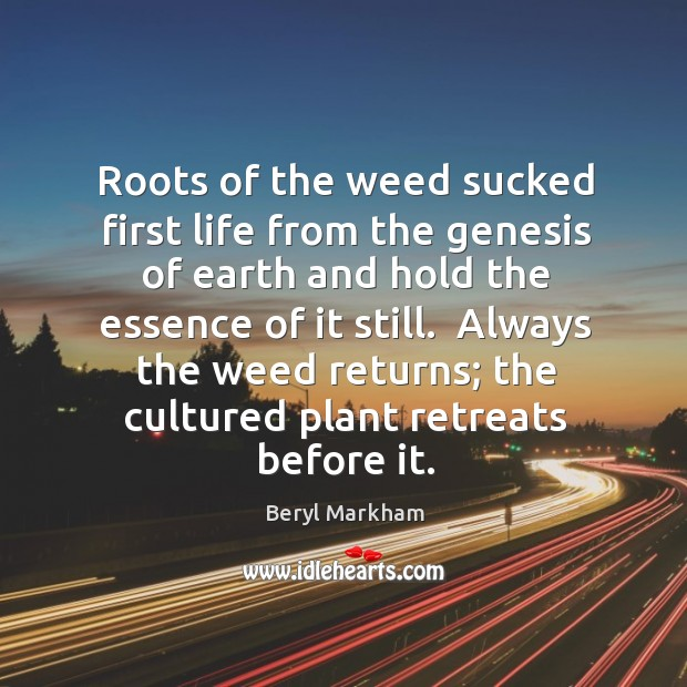 Roots of the weed sucked first life from the genesis of earth Beryl Markham Picture Quote