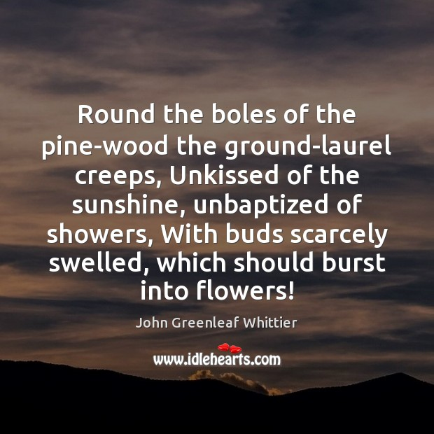 Round the boles of the pine-wood the ground-laurel creeps, Unkissed of the John Greenleaf Whittier Picture Quote
