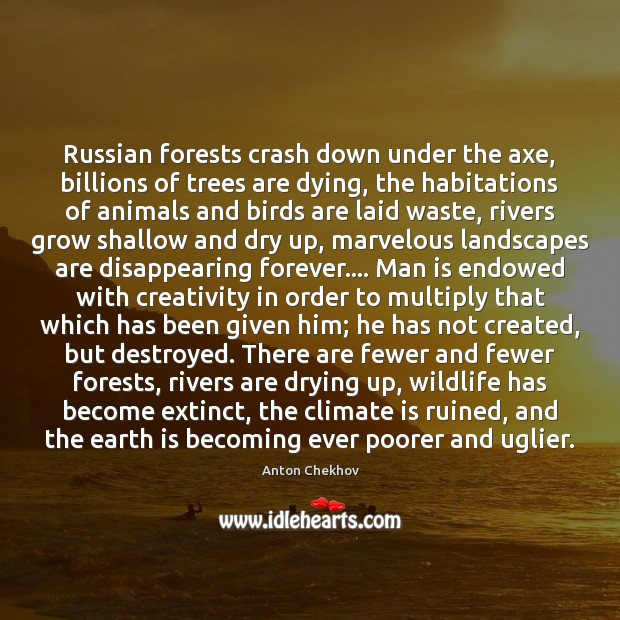 Russian forests crash down under the axe, billions of trees are dying, Image