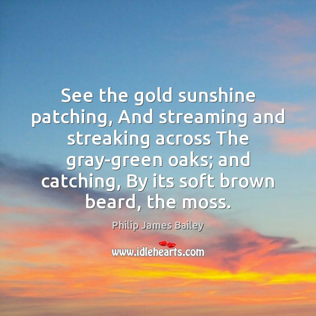 See the gold sunshine patching, And streaming and streaking across The gray-green Philip James Bailey Picture Quote