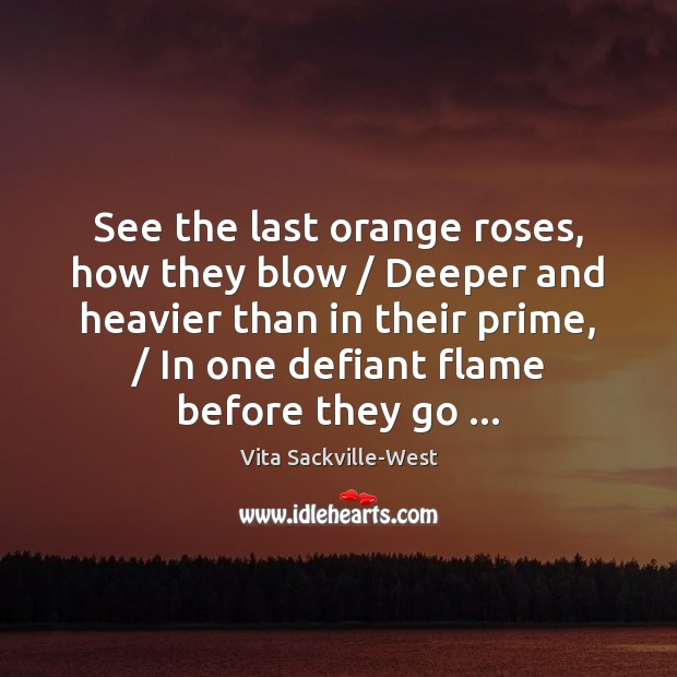 See the last orange roses, how they blow / Deeper and heavier than Vita Sackville-West Picture Quote