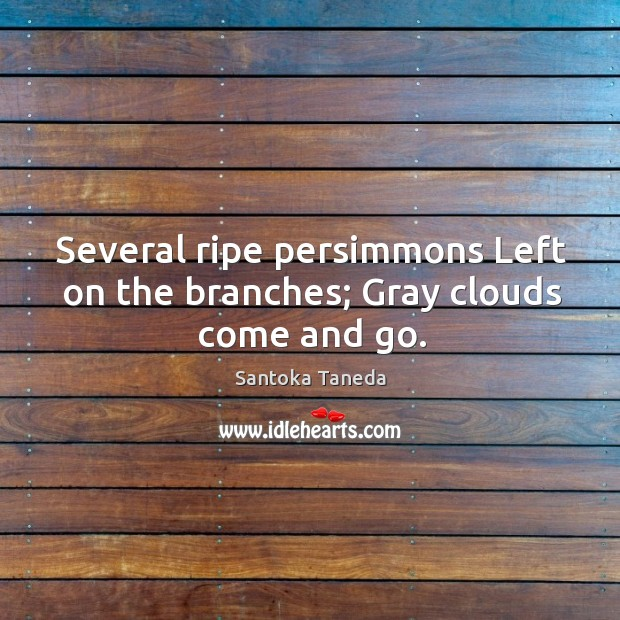 Several ripe persimmons Left on the branches; Gray clouds come and go. Image