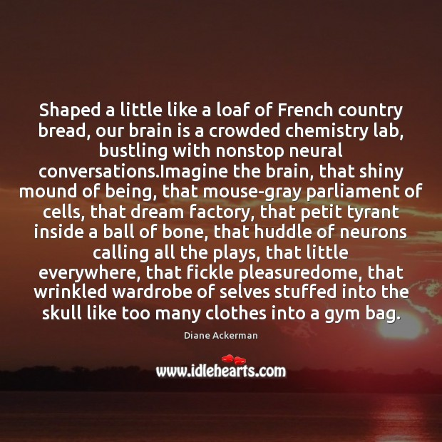 Shaped a little like a loaf of French country bread, our brain Diane Ackerman Picture Quote