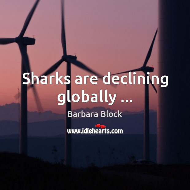 Image, Sharks are declining globally …