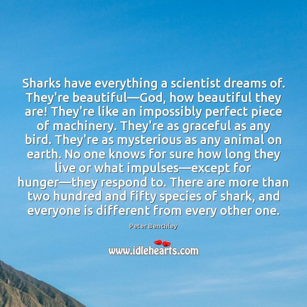 Sharks have everything a scientist dreams of. They're beautiful―God, how beautiful Image