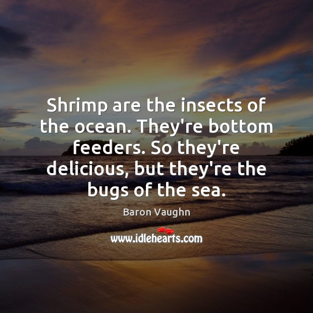 Image, Shrimp are the insects of the ocean. They're bottom feeders. So they're