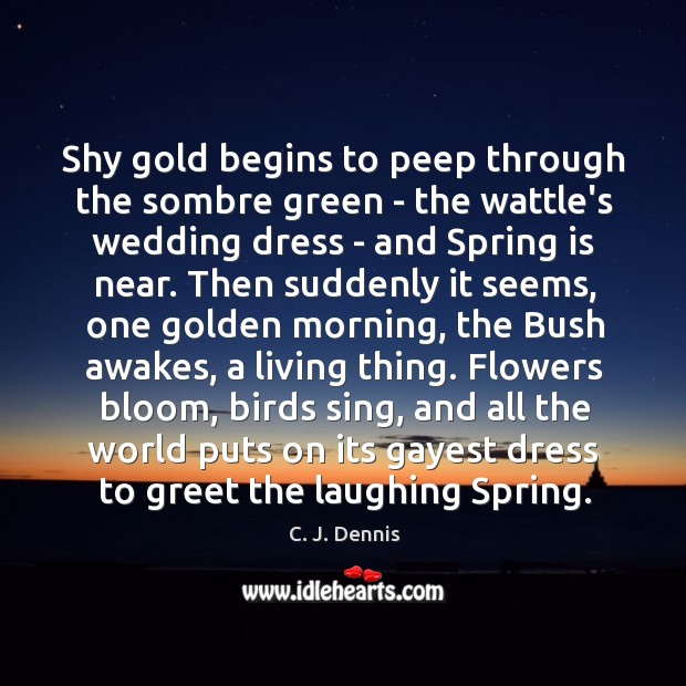 Image, Shy gold begins to peep through the sombre green – the wattle's