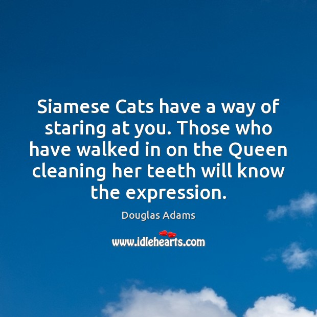 Siamese Cats have a way of staring at you. Those who have Douglas Adams Picture Quote
