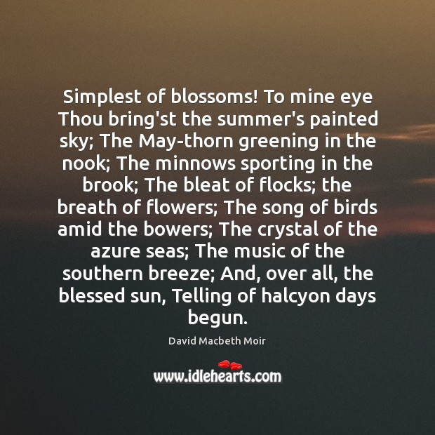 Simplest of blossoms! To mine eye Thou bring'st the summer's painted sky; Image