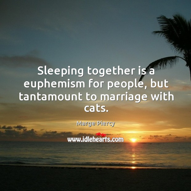 Sleeping together is a euphemism for people, but tantamount to marriage with cats. Image
