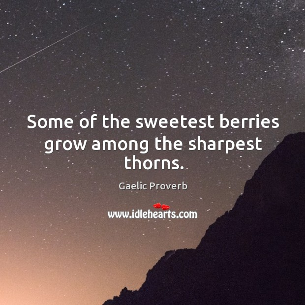 Some of the sweetest berries grow among the sharpest thorns. Gaelic Proverbs Image