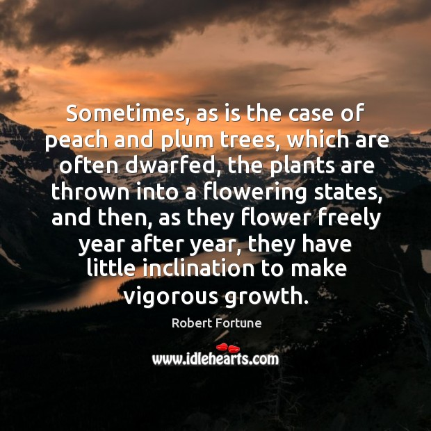 Sometimes, as is the case of peach and plum trees, which are often dwarfed Robert Fortune Picture Quote