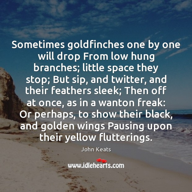 Sometimes goldfinches one by one will drop From low hung branches; little Image