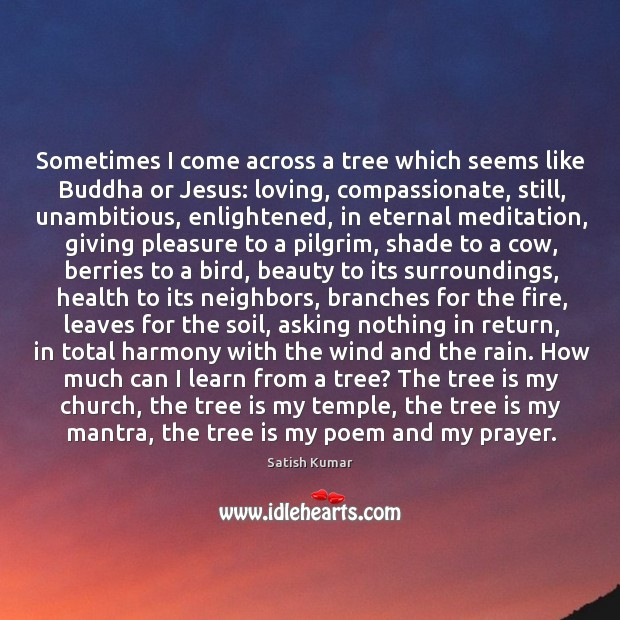 Sometimes I come across a tree which seems like Buddha or Jesus: Satish Kumar Picture Quote