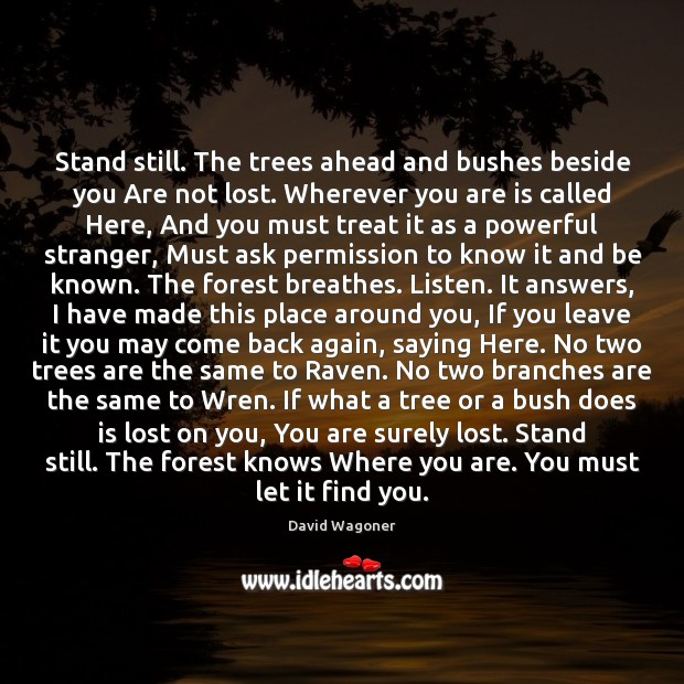 Image, Stand still. The trees ahead and bushes beside you Are not lost.