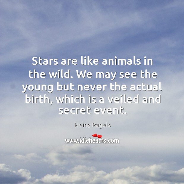 Stars are like animals in the wild. We may see the young but never the actual birth, which is a veiled and secret event. Heinz Pagels Picture Quote