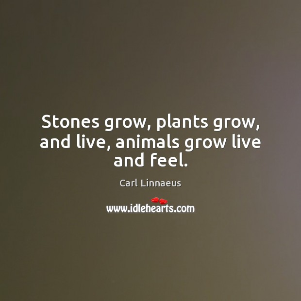 Image, Stones grow, plants grow, and live, animals grow live and feel.