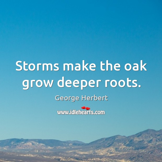Storms make the oak grow deeper roots. Image
