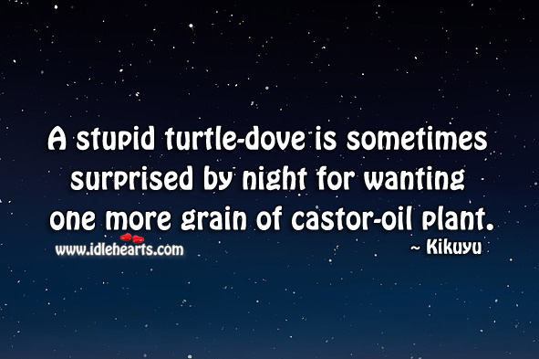 A stupid turtle-dove is sometimes surprised by night for wanting Kikuyu Proverbs Image