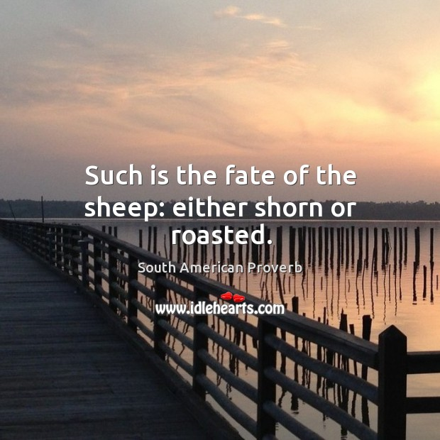 Such is the fate of the sheep: either shorn or roasted. South American Proverbs Image
