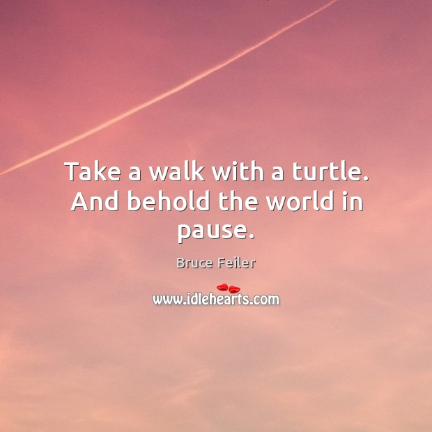 Image, Take a walk with a turtle. And behold the world in pause.