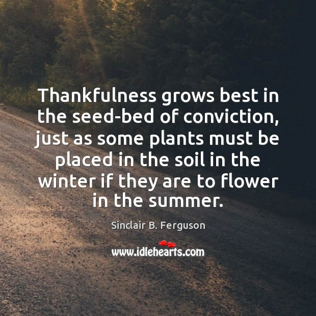 Thankfulness grows best in the seed-bed of conviction, just as some plants Sinclair B. Ferguson Picture Quote