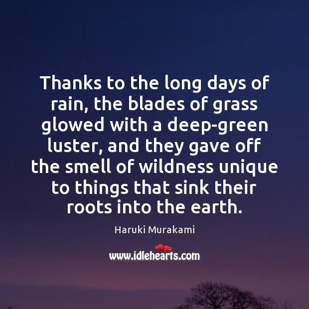 Thanks to the long days of rain, the blades of grass glowed Image